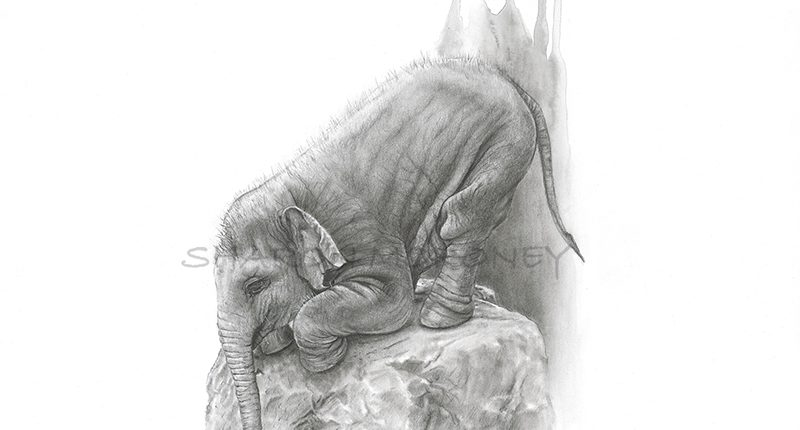 charcoal-watercolour baby elephant crouching down peering over the edge of a rock barely large enough for it to fit- the edge of existence