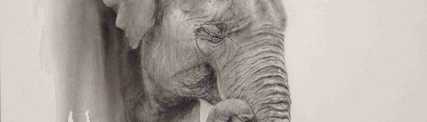 charcoal watercolour elephant head disappearing into the background